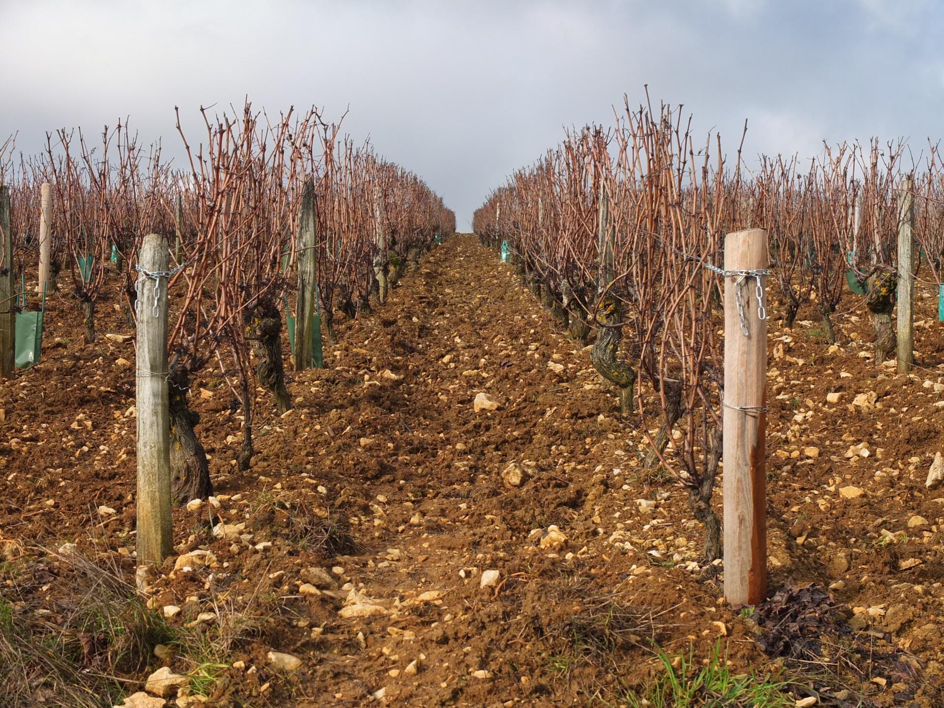 Avec des rangs de vignes pour unique horizon