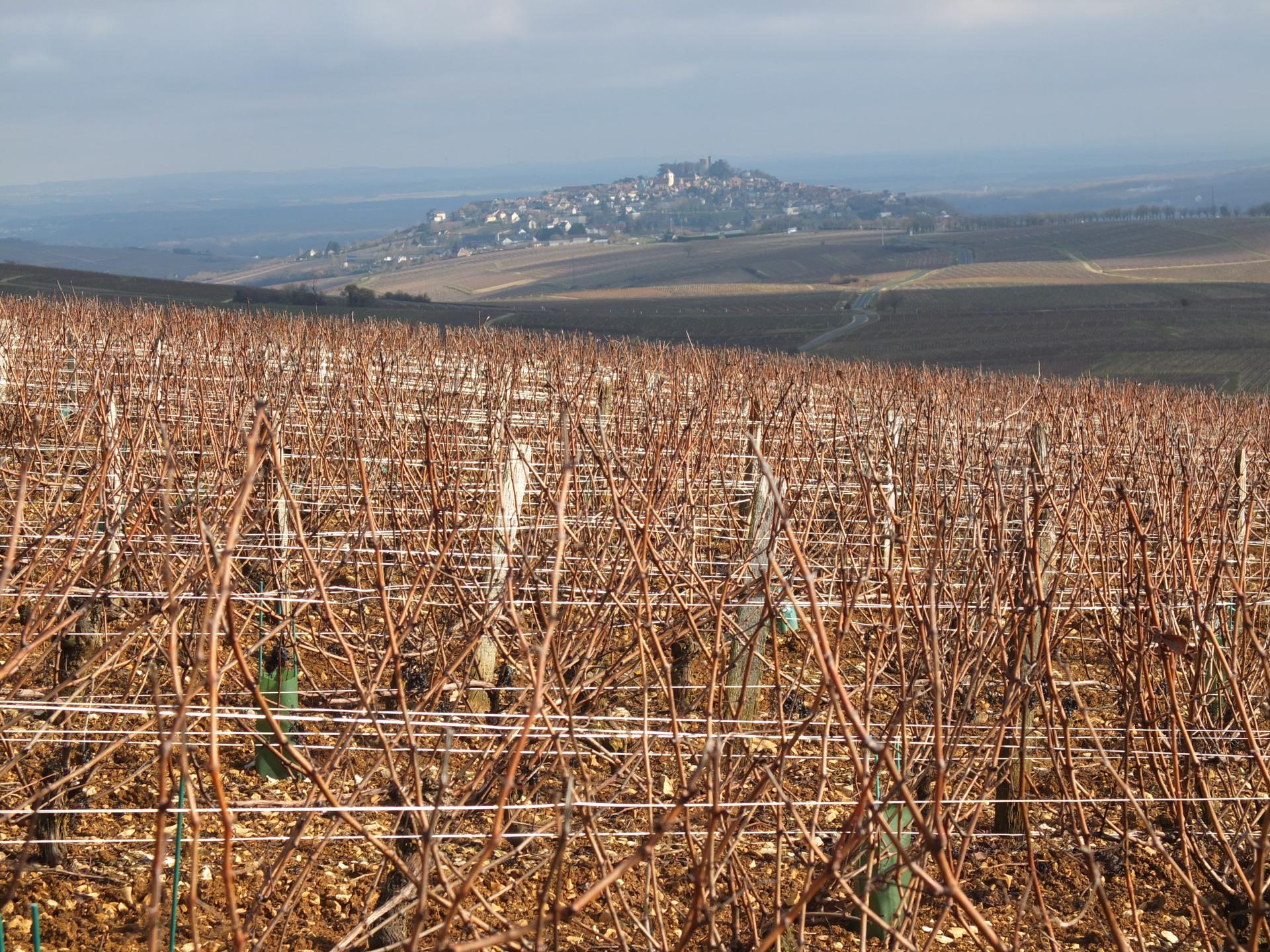 Et le fil des vignes pour unique ancrage
